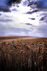 Noor (Aozma Qureshi) Tags: light sky clouds landscape corn cornfields yahoo:yourpictures=yourbest2014image