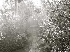 in the mist ( Explore ) (Demetrios Lyras) Tags: goldengatepark flowers bw blackwhite fav50 conservatoryofflowers sfist fav10 fav5 fav25 sanfranciscocausa inexplore fav75 inthemist 50faves123