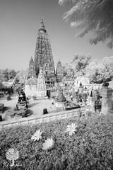 India_0145