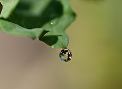 marble (Kazooze) Tags: macro nature fog garden waterdrop refraction diamondclassphotographer flickrdiamond fogdrop