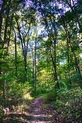 DSC05467-69_HDR (Capt Kodak) Tags: autumn chattahoocheerivernationalrecreationarea fall hdrefexpro2 madefrom3images medlockbridgepark nationalparkservice nikcollectionbygoogle niksoftware photomerge