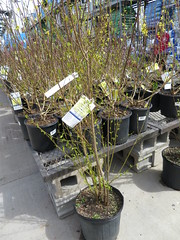 IMG_1420 (pbinder) Tags: 2016 201603 20160322 march mar tuesday tue kansas city missouri kansascity kansascitymissouri kc mo kcmo lowes plants