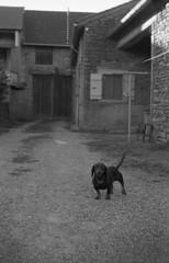 Little dog is watching you (Blitzwuerfel (flash cube)) Tags: werracamera tessar2850 burgundy rodinal efke50