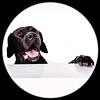 IMG_6203 (Fotometz) Tags: hund tier anblick animals aufmerksam background betteln bettelne blick braun dog dogs eckzahn pelz pet pets schauend schwarz säugetier welpe white wissbegierig