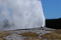 _DSC8295 (DianeBerky19) Tags: nikondf wy jacksonholewyoming yellowstonenationalpark oldfaithful geyser