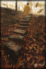 l'Escalier Mystrieux... ( P-A) Tags: escaliermystrieux automne couleurs feuilles arbres ferique apparition troublant nature parc lacs saison photos simpa magicmoments atravsdetumirada