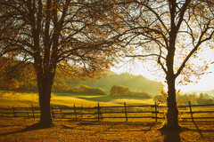 the beauty of autumn (OH-Photography) Tags: bume herbst landscape laub natur schwbischealb