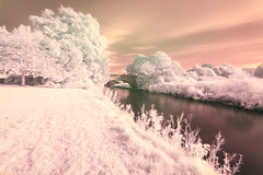 Cotton Candy (susans7777) Tags: infrared cotton candy pink white trees colour river water bridge longexposure