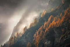 [devero] (Ennio Pozzetti) Tags: autumn devero italy fog mist clouds colors trees larix rocks light mood nature landscape travel