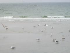 2016_10_27 1315 IMG_5037 (gruengrau) Tags: meer sea mwen seagulls strand beach water warnemnde rostock wasser ufer