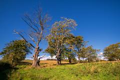 A cut too much (technodean2000) Tags: cut too much dead tree llantrisant common