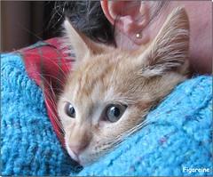 Doudou est un coquin ... (Figareine- Michelle) Tags: chat