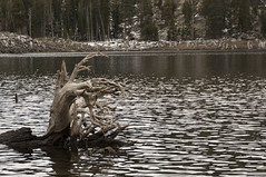 Stump in the lake (Pedro M. Gmez) Tags: treestump sierralake mountainlake lakescenes waterscene