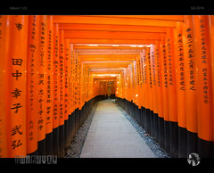 The Endless Path (tomraven) Tags: shrine temple kyoto bamboo orange japan path tomraven aravenimage q42016 nikon1 v2