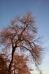 A Tree At Daybreak (mohsenil@ymail.com1) Tags: tree daybreak dawn firstlight sunrise chautaquapark
