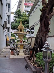 Bangkok cat & spirit house (ashabot) Tags: cat bangkok thailand citystreets streetscenes street seasia zebras spirithouse