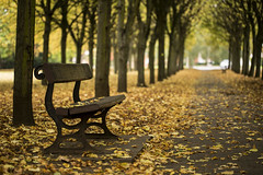 Port Sunlight avenue (Spokenwheelphotography) Tags: autumn autumnal beautiful beauty nature naturalworld naturephotography portsunlight tree trees wirral wildlife cheshire colours colourful bench seat canon canon5diii canonphotography canon5d3 canonofficial 100mm li