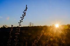 flare (petdek) Tags: flare color outdoor nature closeup sunset