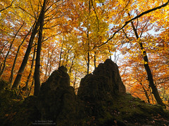 Autumn light at Schwarzer Brand 2016-1 (Bernhard_Thum) Tags: bernhardthum thum nature franken hasselblad hcd4824 schwarzerbrand hirschbachtal autumn rockpaper