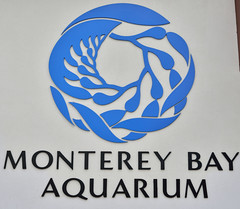 Monterey Bay Aquarium (RichSeattle) Tags: richseattle nikon d750 fish aquarium montereybayaquarium montereybay california