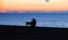 Pasear Al Perro / Doggy Beach Walk (Konny D. ...on trip) Tags: dogs hunde cani chiens perros cães koirat psy honden hundene hundarna σκυλιά skyliá beach strand spiaggia plage playa praia stranden ranta atlantik atlantic ocean