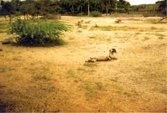 198002.517.indien.rameswaram (sunmaya1) Tags: india tamilnadu rameswaram
