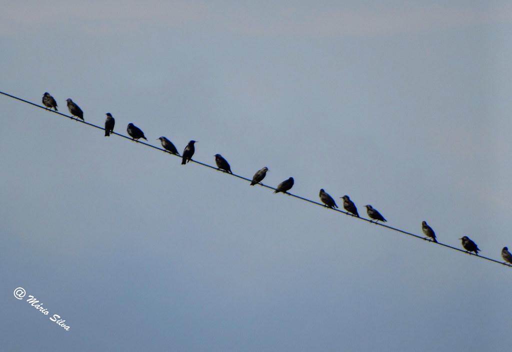 Águas Frias (Chaves) - ... os pássaros descansando no fio eletrico, disfrutando da paisagem ...