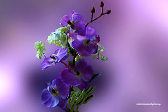 YOU LIGHT UP MY LIFE. (Viktor Manuel 990.) Tags: orchids orquideas flowers digitalart artedigital quertaro mxico victormanuelgmezg