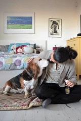 a saturday (gretasolinas) Tags: dog basset hound bassethound saturday mylove manuel bedroom camilla
