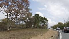 Drive Through Bandipur (code_martial) Tags: d3300 1685mmf3556gvr ooty2016 shotbynazia bandipur