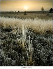 The start of a new day (nandOOnline) Tags: mist morning strabrecht koud sunrise december nature nevel landscape vorst zonsopkomst dauw natuur strabrechtseheide cold fog ochtend landschap frost heeze nbrabant nederland