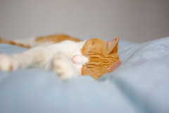 When everyday is Saturday (cuppyuppycake) Tags: saturday cat bed lazy sleepy stretch ginger pet animal indoor bedroom paw cozy