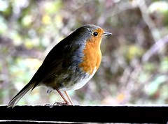 Nice view here (ericy202) Tags: robin birdhidewindow norfolk