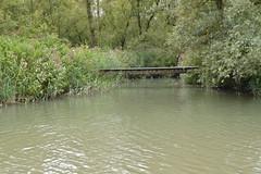 DSC_1035 (jeannettejacobs) Tags: biesbosch natuur bos