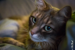 Rosa cat (Hermann.Click) Tags: chat cat gate animaux animal animals portrait