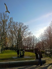 Flying over ((speck)) Tags: niceday flying seagull bluesky statue libertyisland statueofliberty behindthetrees