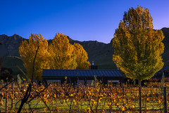 Cabin in the woods (watchthewrld) Tags: horizon landscape sunset nature newzealand winery sony hills tones light sun blue hawkesbay warm tree travel napier afternoon sky colours wine grapes a6000 mountain