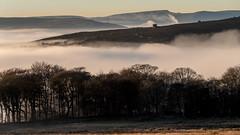 Above the cloud (neil.bulman) Tags: countryside longshawestate peakdistrict nature nationalpark derbyshire longshaw fog cloudinversion inversion cloud nationaltrust sheffield england unitedkingdom gb