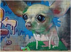 Big eyes - Big ears *   . P1230718-002 (maya.walti HK) Tags: 051216 2010 augen copyrightbymayawaltihk españa eyes flickr graffiti grafiti hund ohren ojos panasonicfz28 spain spanien streetart
