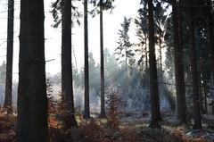 DSC_5756 Ein märchenhafter Sonnenaufgang im Wald - A fairytale sunrise in the forest (baerli08ww) Tags: deutschland germany rheinlandpfalz rhinelandpalatinate westerwald westerforest wald forest winter raureif hoarfrost