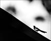 F-F_47A2132-1-BW-Canon 5DIII-Canon 70-300mm-May Lee 廖藹淳 (May-margy) Tags: 心象於花博公園 maymargy bw 黑白 鳥 樹木 樹枝樹葉 屋簷 模糊 散景 臉譜 線條造型與光影 linesformandlightandshadows 天馬行空鏡頭的異想世界 mylensandmyimagination 心象意象與影像 naturalcoincidencethrumylens 街拍 streetviewphotographytaiwan 台北市 台灣 中華民國 taiwan repofchina f47a21321bw facesinplaces bird tree leaves roof blur bokeh taipeicity canon5diii canon70300mm maylee廖藹淳 雀來報喜