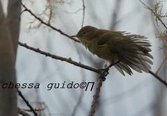 _DSC3304 - Copia1 (kguido38) Tags:
