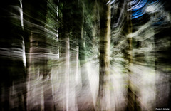 abstractive forest-26 (Philippe Gillotte) Tags: trees abstract tree green nature vertical forest natural zoom arbres arbre fort bois filante verticale floue effet bois abstractive pylnes verticaux boise floutage fortgalerie