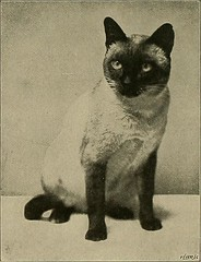 """Image from page 107 of """"Our domestic animals, their habits, intelligence and usefulness;"""" (1907)"""