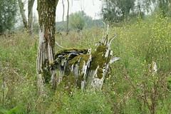DSC06395 (Ton Smilde) Tags: oostvaardersplassen naturereserveinthenetherlands
