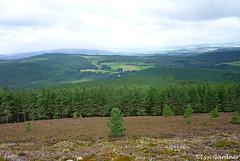 Glentanar (LynG67) Tags: aberdeenshire glentanar equestriancentre