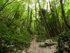Bosco nella gola delle prigioni (Luca Pisani) Tags: parco valle monte delle regionale cucco prigioni motette pascelupo