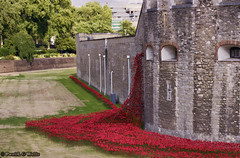 _MG_2666_edit (plw1053) Tags: red green london tower art tourism grass stone architecture river ceramic stonework documentary installation poppy poppies pottery moat toweroflondon 50mmf14 canon600d buzsim