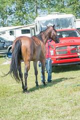 DSC_0795-1 (Glenn Fullum) Tags: nikon barrels hose chevaux baril gymkhana d5200