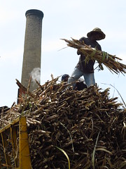 027 (alexandre.vingtier) Tags: haiti rum caphaitien nazon clairin rhumagricole distillerielarue